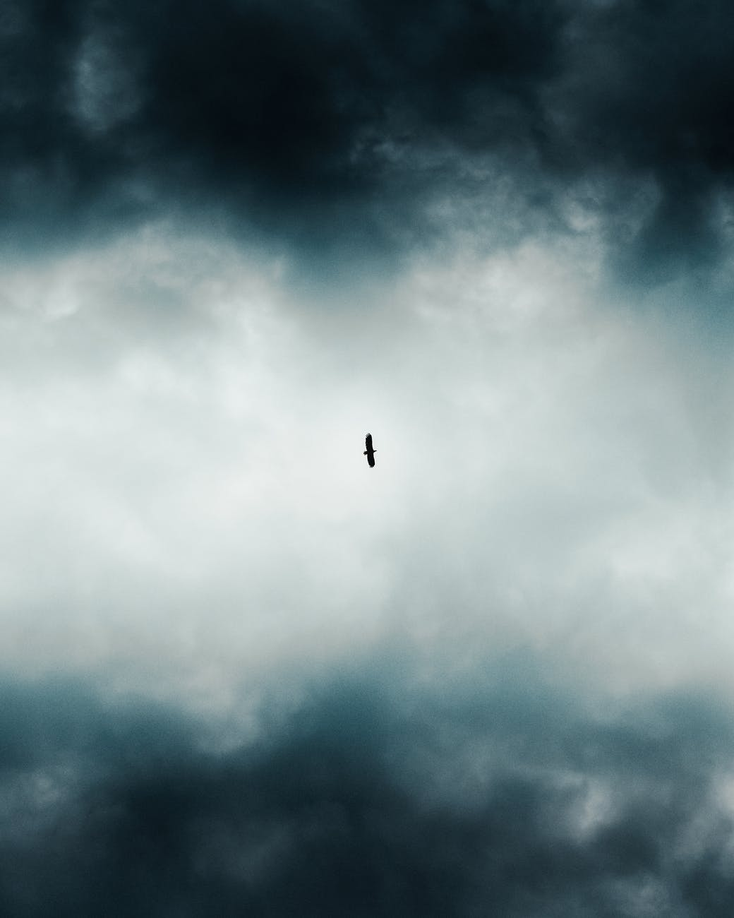 low angle photo of bird flying across dark clouds